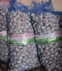 10kg Mesh Bag Normal White Garlic pictures & photos