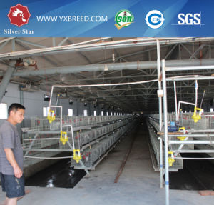 Broiler Chicken, Chicken Use and Farming Equipment Type Poultry Farming Equipment pictures & photos