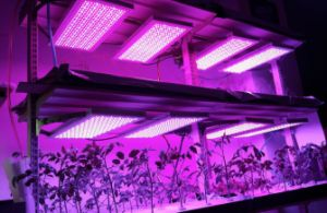 47W SMD2835 LED Grow Light Panel pictures & photos