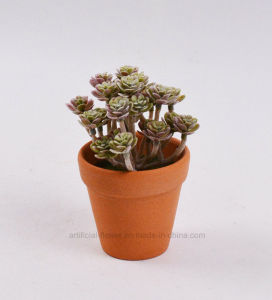 Vivid Artificial Mini Succulent Plants for Decoration pictures & photos