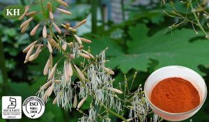 Hot Selling High Quality Macleaya Cordata Extract Sanguinarine/Chelerythrine pictures & photos