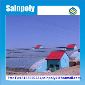 Plastic Covered Vegetable Used Solar Greenhouse pictures & photos