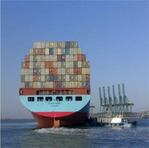 Sea Freight Services From Shanghai to Nhava Sheva, India pictures & photos