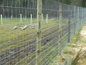 Deer Proof Fence