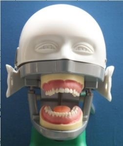 Hot Selling CE Approved Dental Phantom Head pictures & photos