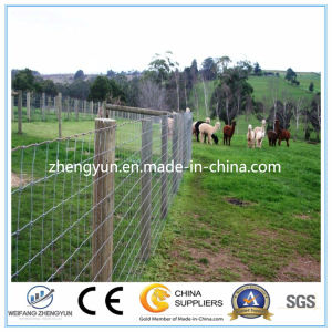 Farm Fencing Mesh/Fixed Knotted Netting Field Fence pictures & photos