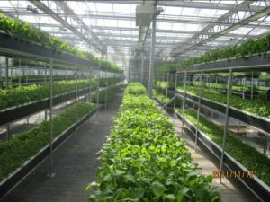 PE Film/ Plastic / Glass Greenhouse Hydroponic System for Sale pictures & photos