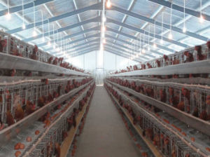 H Type Layer Chicken Equipment Chicken Shed pictures & photos