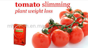 Tomato Plant Weight Loss Diet Pills pictures & photos