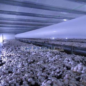 Clima Unit for White Button Mushroom pictures & photos