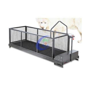 Mc-C600sw (HOT SALES) Running Machine for Tibetan Mastiff pictures & photos