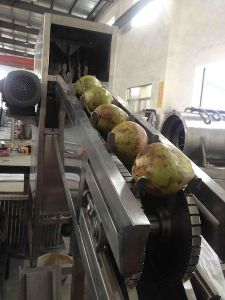 Coconut Process Machine pictures & photos