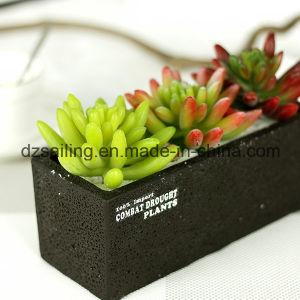 Decorative Plant Natural Touch Artificial Succulents Artificial Flower (SW17666) pictures & photos