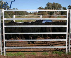 6 Rails Galvanized Portable Metal Frame Material Cattle Yard Panels pictures & photos