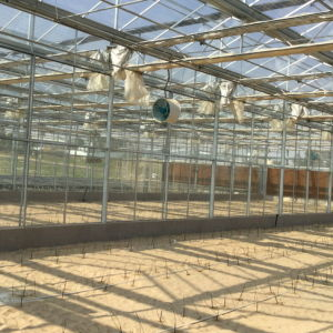 Commercial Glass Garden Greenhouse for Vegetable Growing pictures & photos
