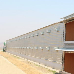 Steel Frame Poultry Shed with Poultry Farming Equipment pictures & photos