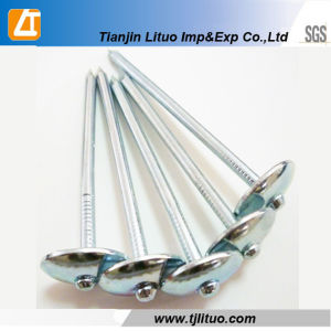 Umbrella Head Roofing Nails with Plain Shank Electro Galvanized pictures & photos