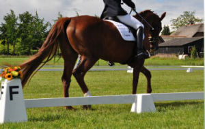 Dressage Arena Cones, Horse Racing Rail pictures & photos