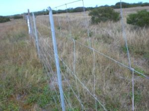 Deer Proof Fence pictures & photos