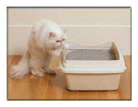 2016 Hot Sales Chinese Hello Cat Bentonite Cat Litter