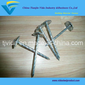 Zinc Coated Umbrella Head China Roofing Nails for Africa Market pictures & photos