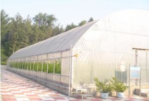 Commercial Agricultural Tunnel Green House for Vegetable Growing pictures & photos