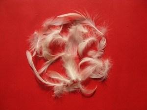 White Goose Feather (4-8cm)