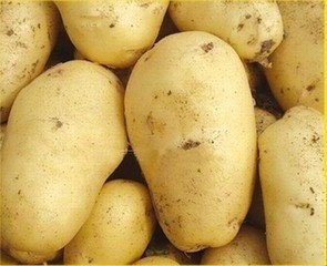 Top Quality Competitive Price Fresh Potato pictures & photos