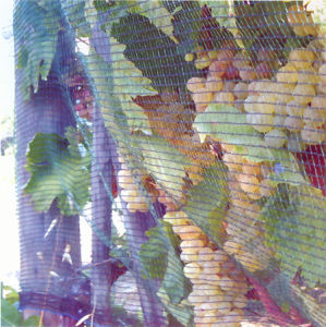 Meyabond Anti Bird Netting (MYJB-01) pictures & photos