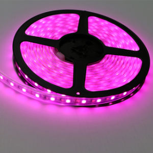 High Brightness IP67 Pink Color SMD5050 Chip 60LEDs 14.4W DC12V LED Strip pictures & photos