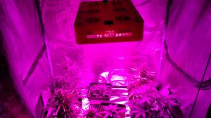 HPS Grow Light Replacement High Power LED Grow Lights 450W pictures & photos