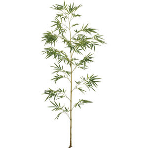 Single Stem Bamboo Plants for Green View Making