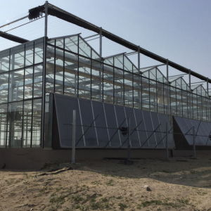 The Commercial Glass Greenhouses for Sale pictures & photos