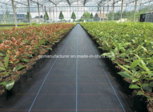 Weed Block for Landscaped Garden Beds PP Woven pictures & photos