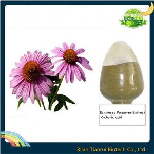 Echinacea Purpurea Extract Cichoric Acid pictures & photos