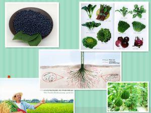 NPK Compound Organic Rice, Wheat, Corn Fertilizer pictures & photos
