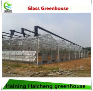 Glass Greenhouse Used for Flower Growing with Steel Structure pictures & photos