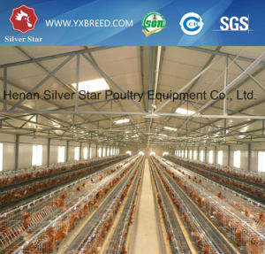 Design Laying Poultry Cage of a Type 3 Tiers 90/120 Birds Capacity pictures & photos