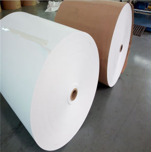 PE Coated Paper for Ice Cream Packaging Cup pictures & photos