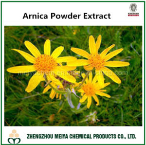 Natural Arnica Powder Extract Used for Boosting The Blood Move pictures & photos