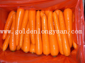 New Crop Fresh Carrot 10kg Carton pictures & photos
