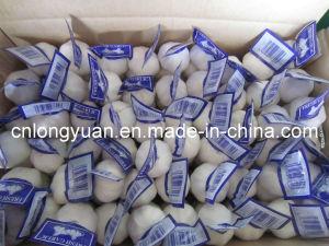 Pure White Garlic, Fresh Garlic pictures & photos