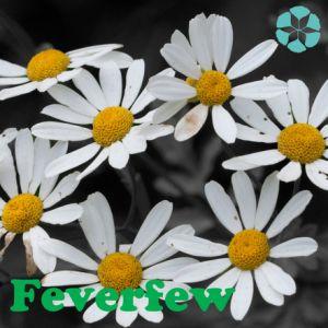 Feverfew Extract / Tanacetum Parthenium Extract / Parthenolide pictures & photos