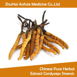 Chinese Pure Herbal Extract Cordyceps Sinensis pictures & photos