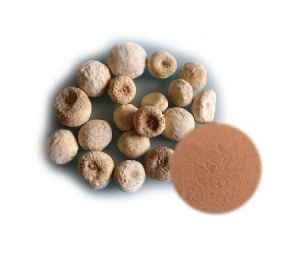 Natural Ternate Pinelliae Extract Powder pictures & photos