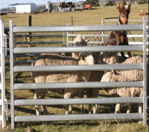 Australia Oval Rails Sheep Stockyard Corral Fence Panel/Horse Yard Panel pictures & photos