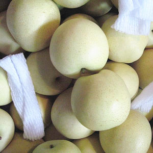 Fresh Golden Pear, Fresh Pear, Sweet Pear pictures & photos