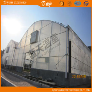 Long Life-Span Arch Structure Multi-Span Film Greenhouse pictures & photos
