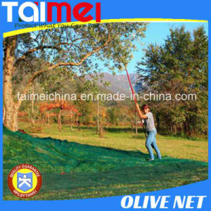 Olive Net / Olive Harvest Nets / Olive Collecting Net pictures & photos
