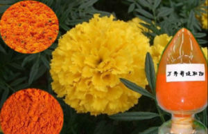 Marigold Extract Eye Protect Lutein Zeaxanthin pictures & photos